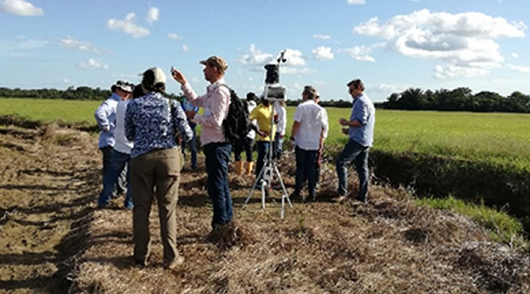 First visit EcoProMIS partners to Rice and Palm fields